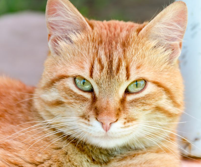 3 curiosidades sobre gatos