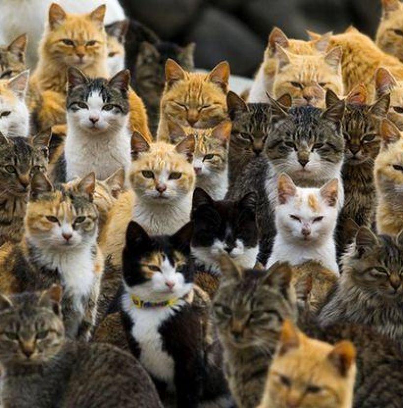 Japão e gatos
