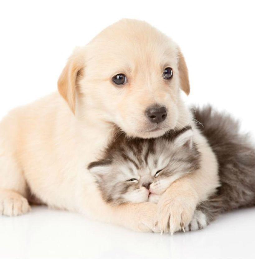 Quem é mais inteligente: cão ou gato?