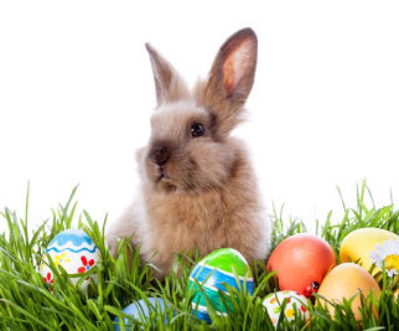 Por que o coelho é símbolo da Páscoa?