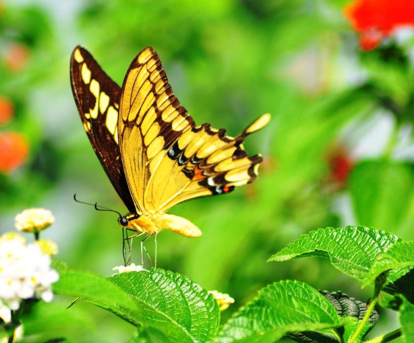A camuflagem das borboletas